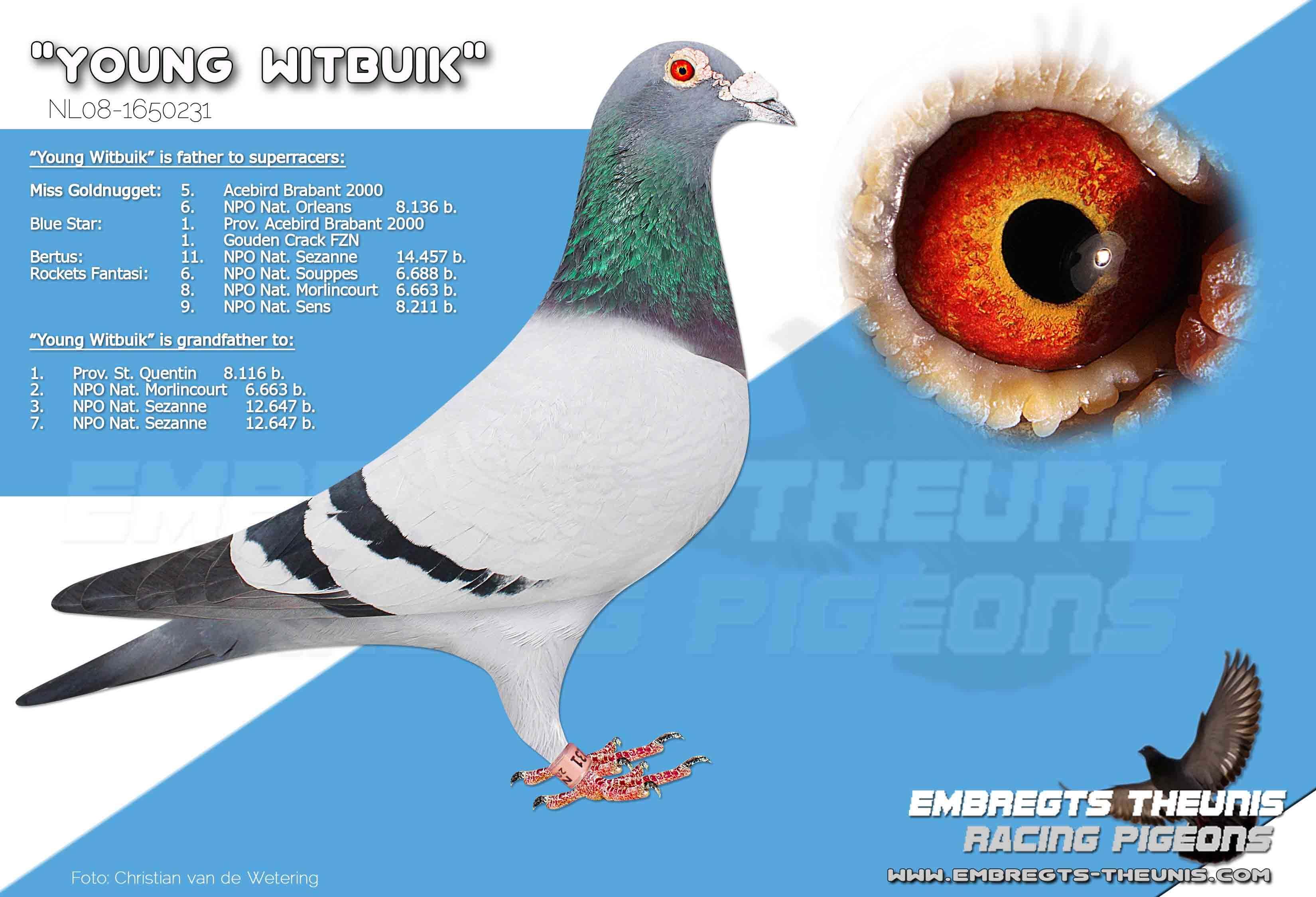 Young-Witbuik-NL08-1650231