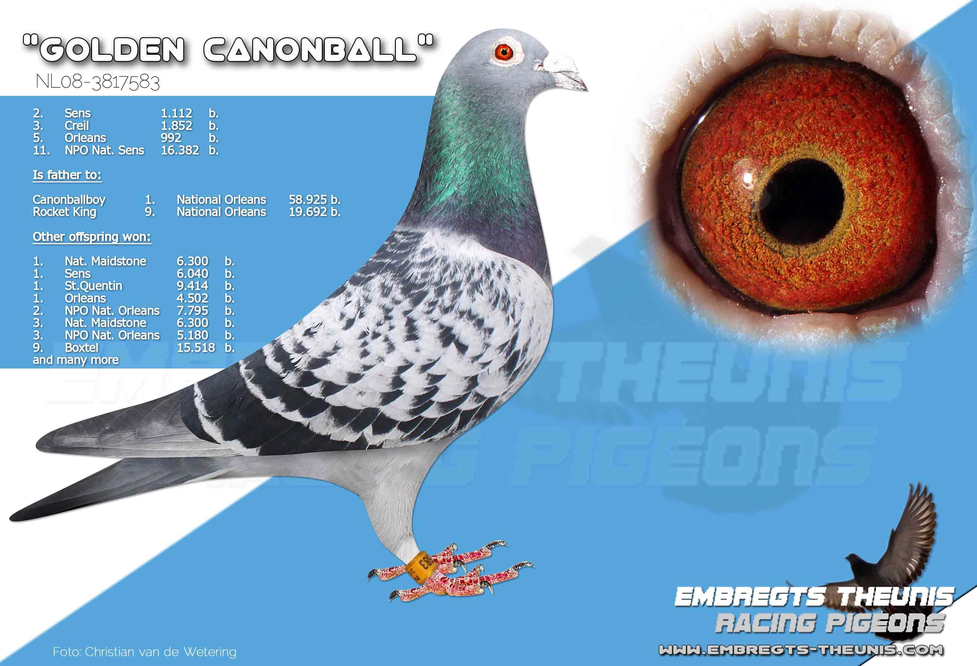 Golden-Canonball-NL08-3817583
