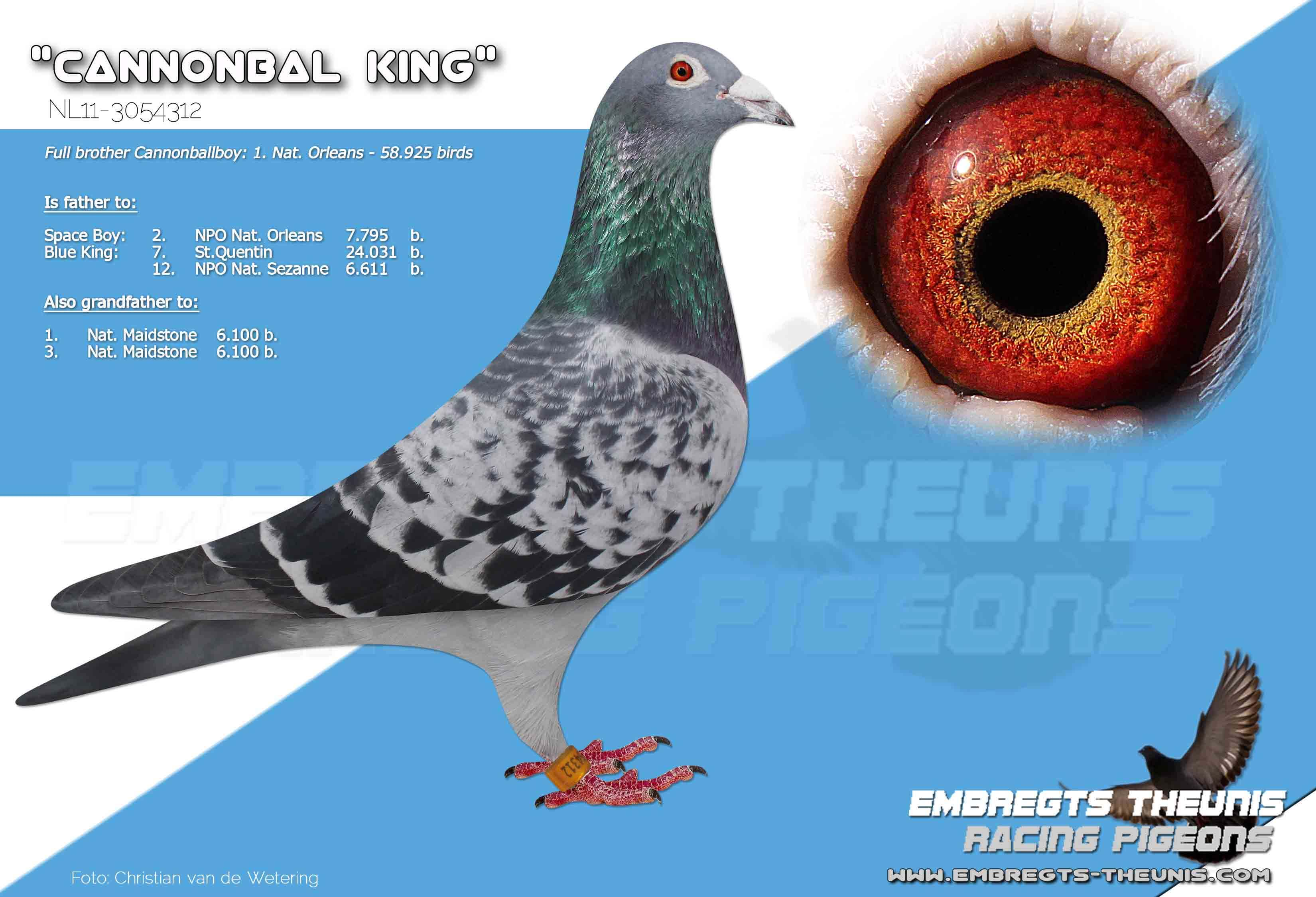 Cannonbal-King-NL11-3054312