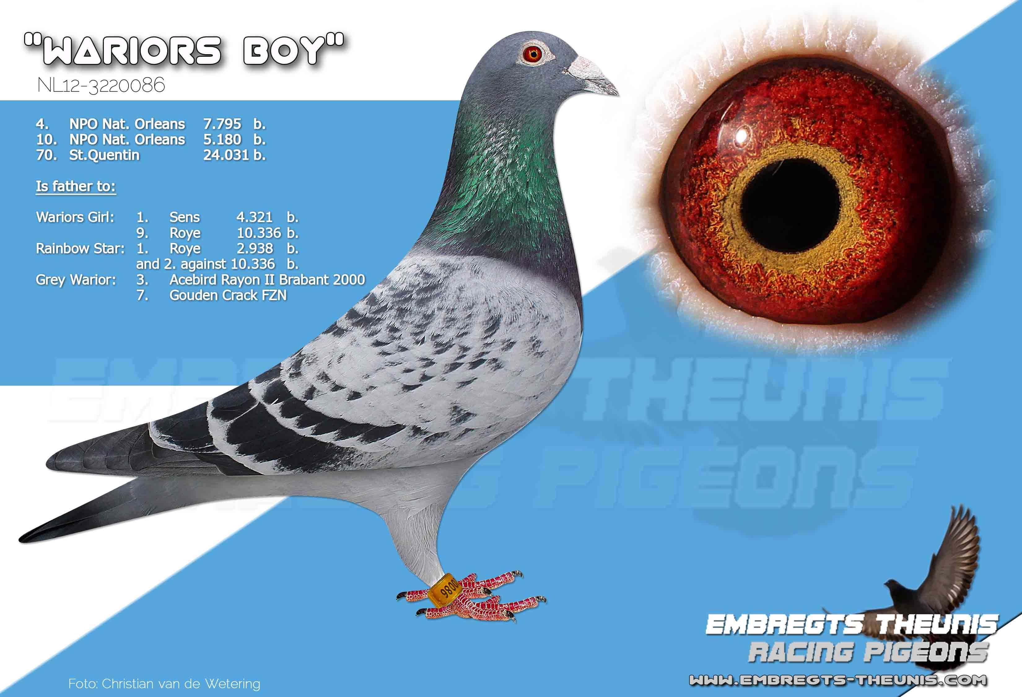 Wariors-Boy-NL12-3220086