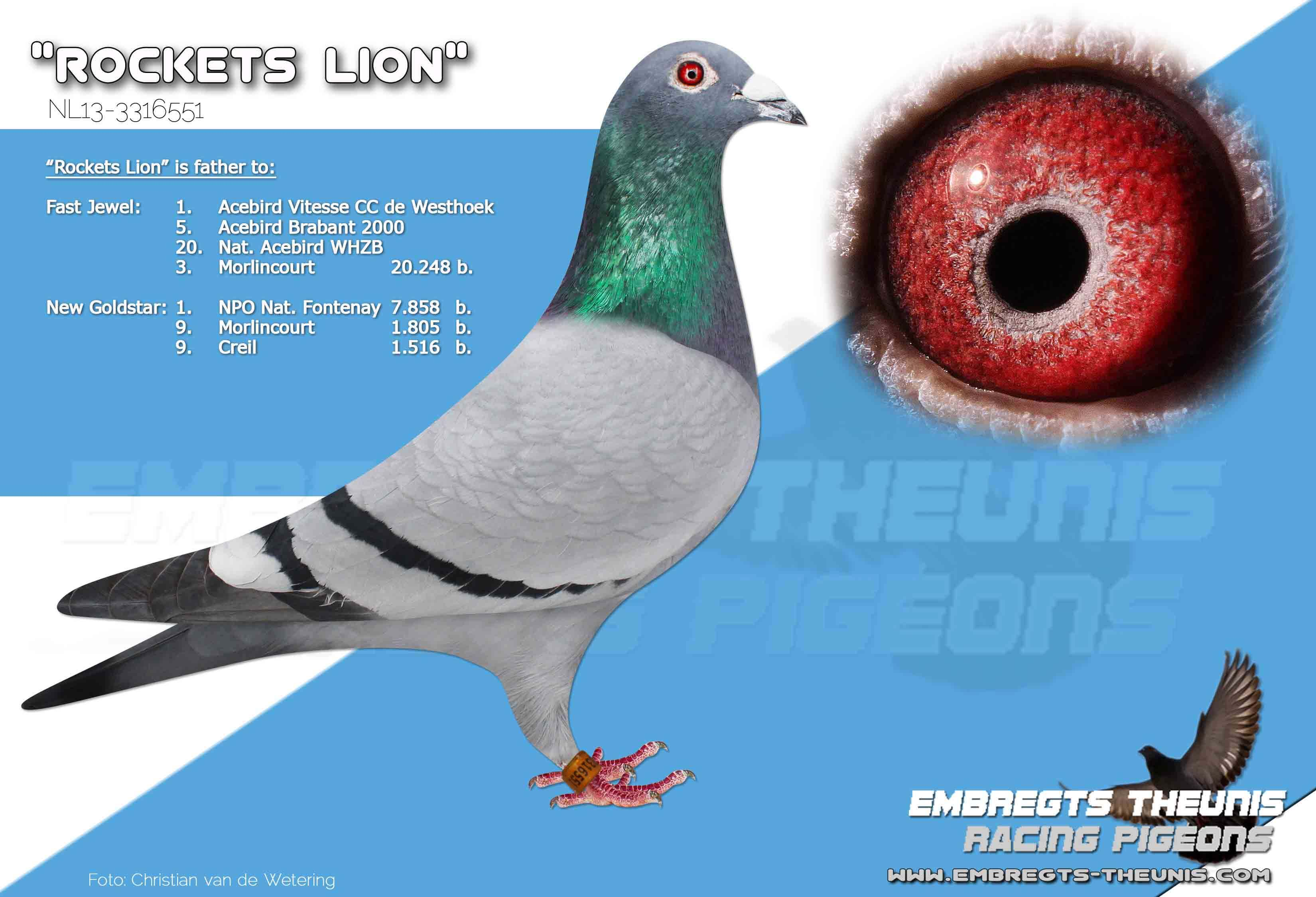 Rockets-Lion-NL13-3316551