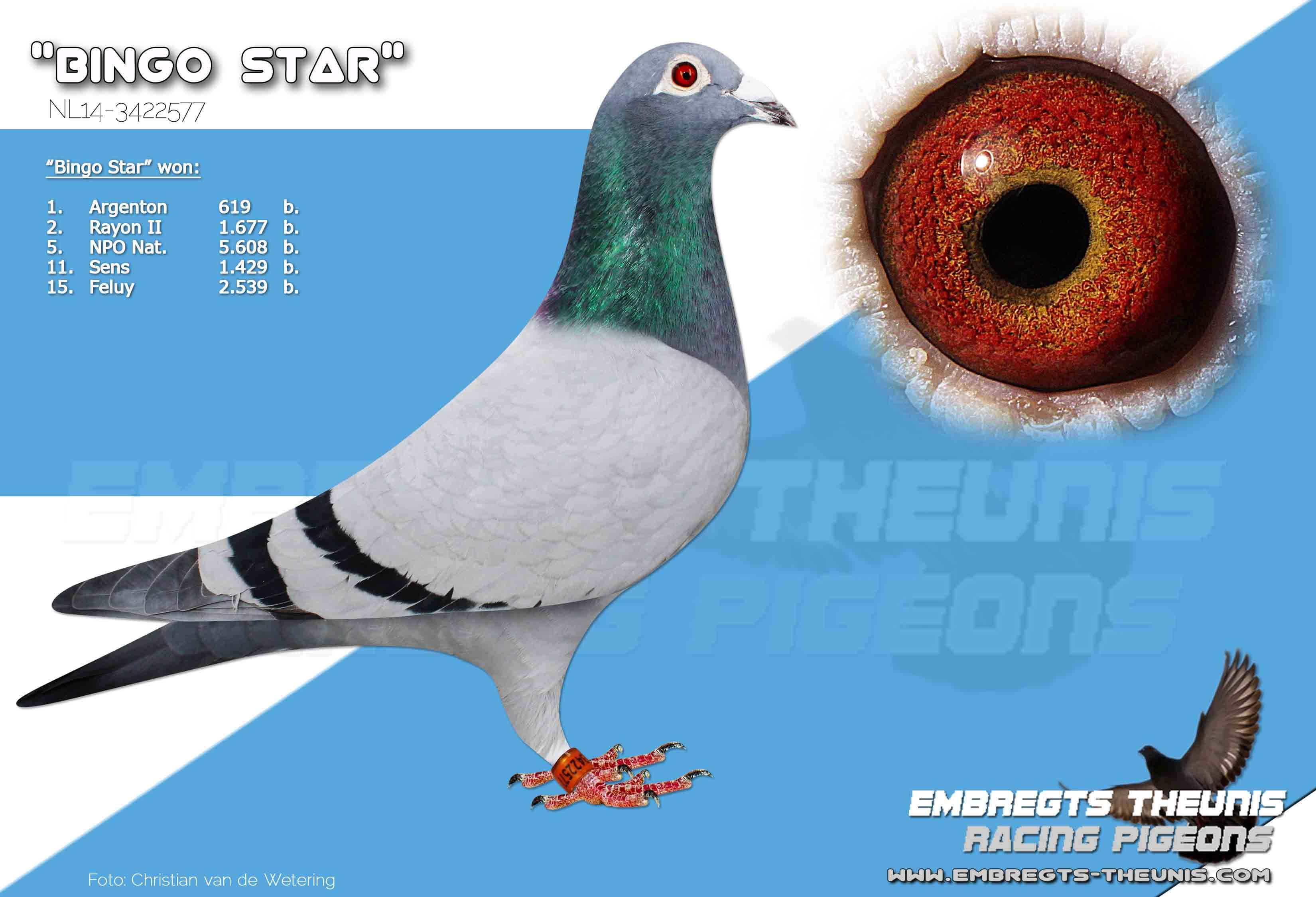 Bingo-Star-NL14-3422577