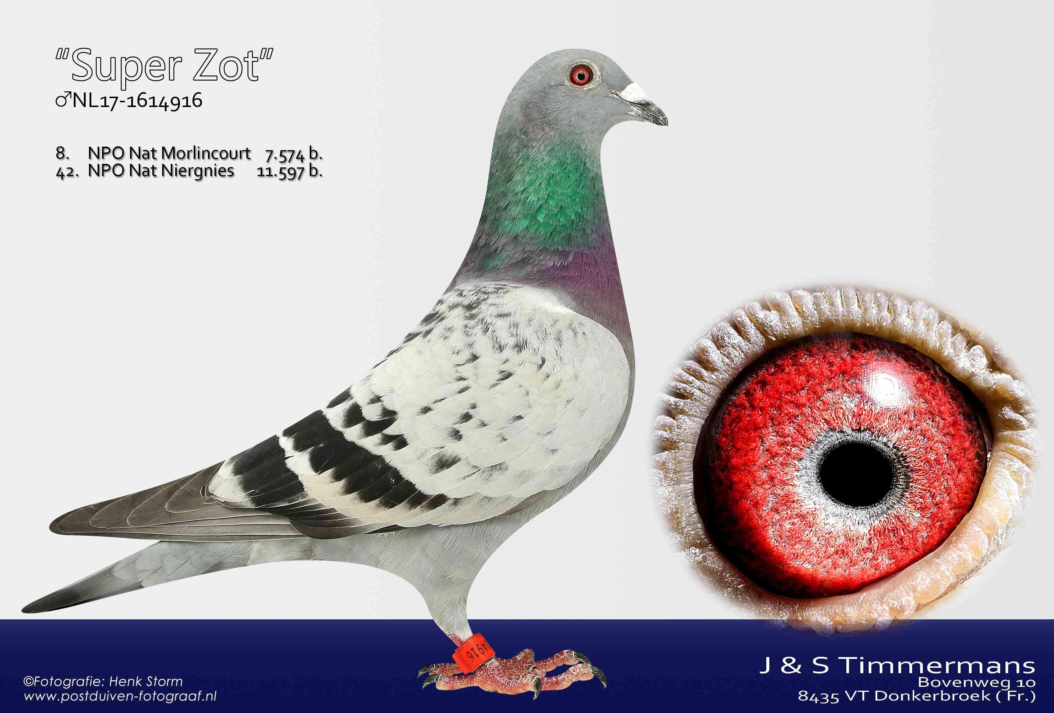 Super-Zot-NL17-1614916
