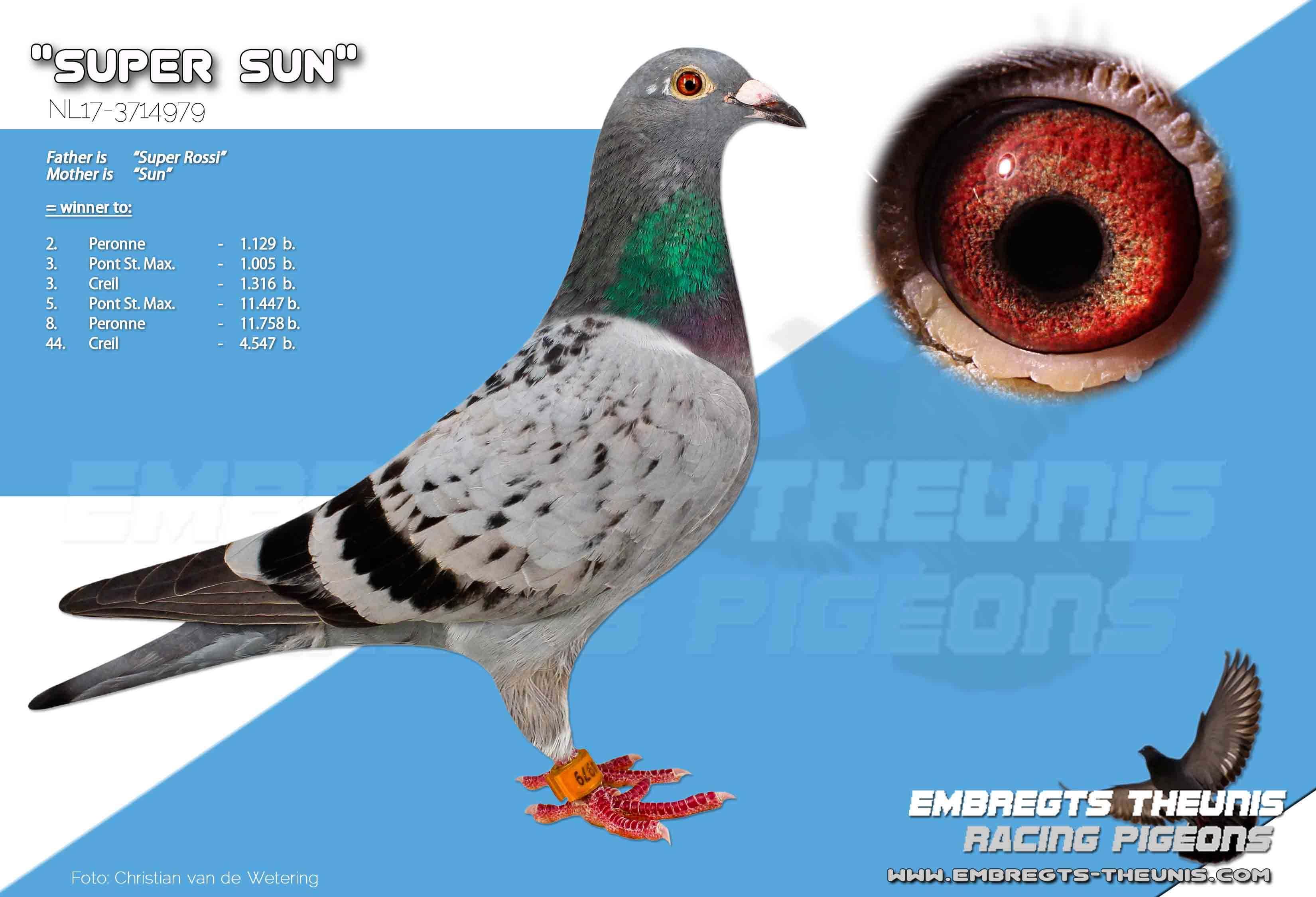 Super-Sun-NL17-3714979