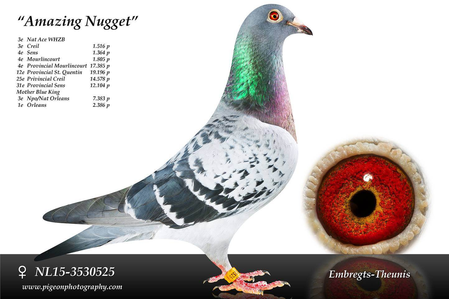Amazing-Nugget-NL15-3530525