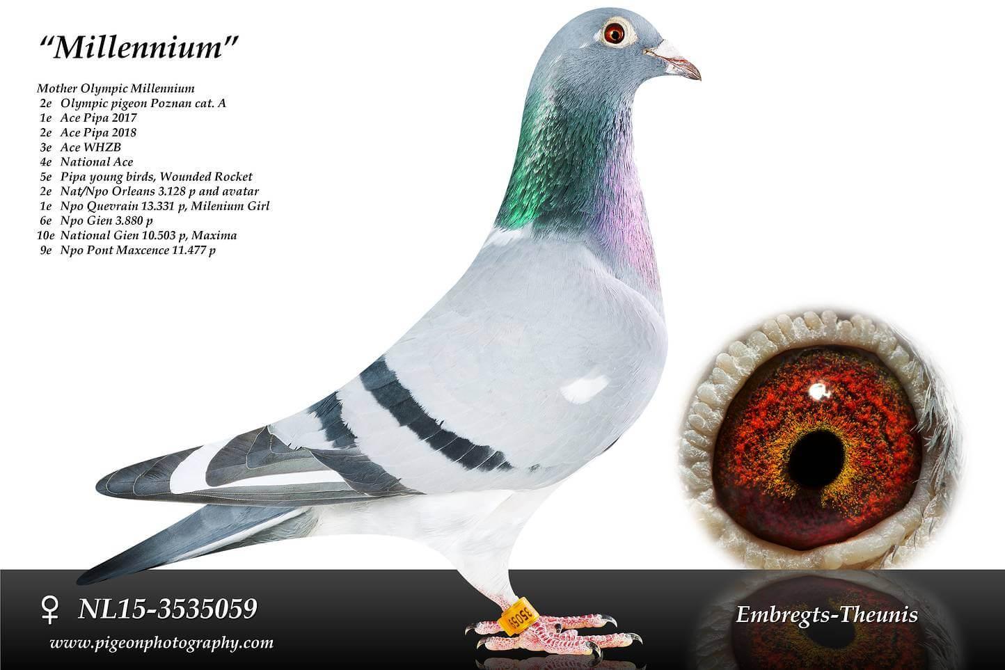 Millennium-NL15-3535059