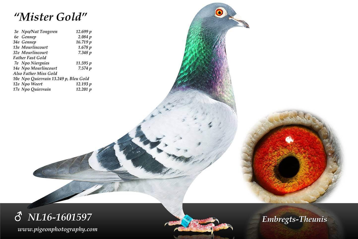 Mister-Gold-NL16-1601597