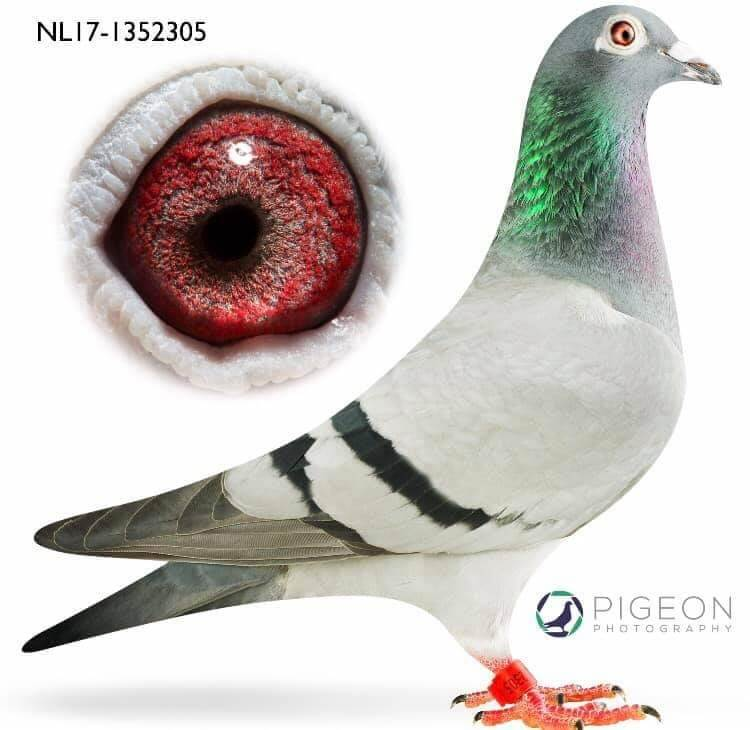 NL17-1352305