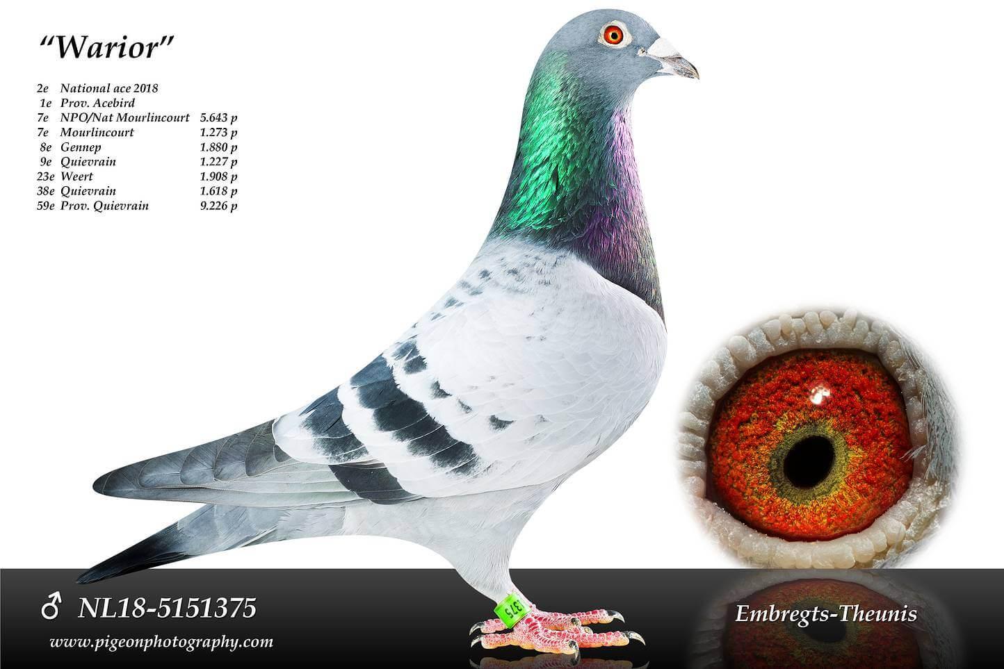 Warior-NL18-5151375