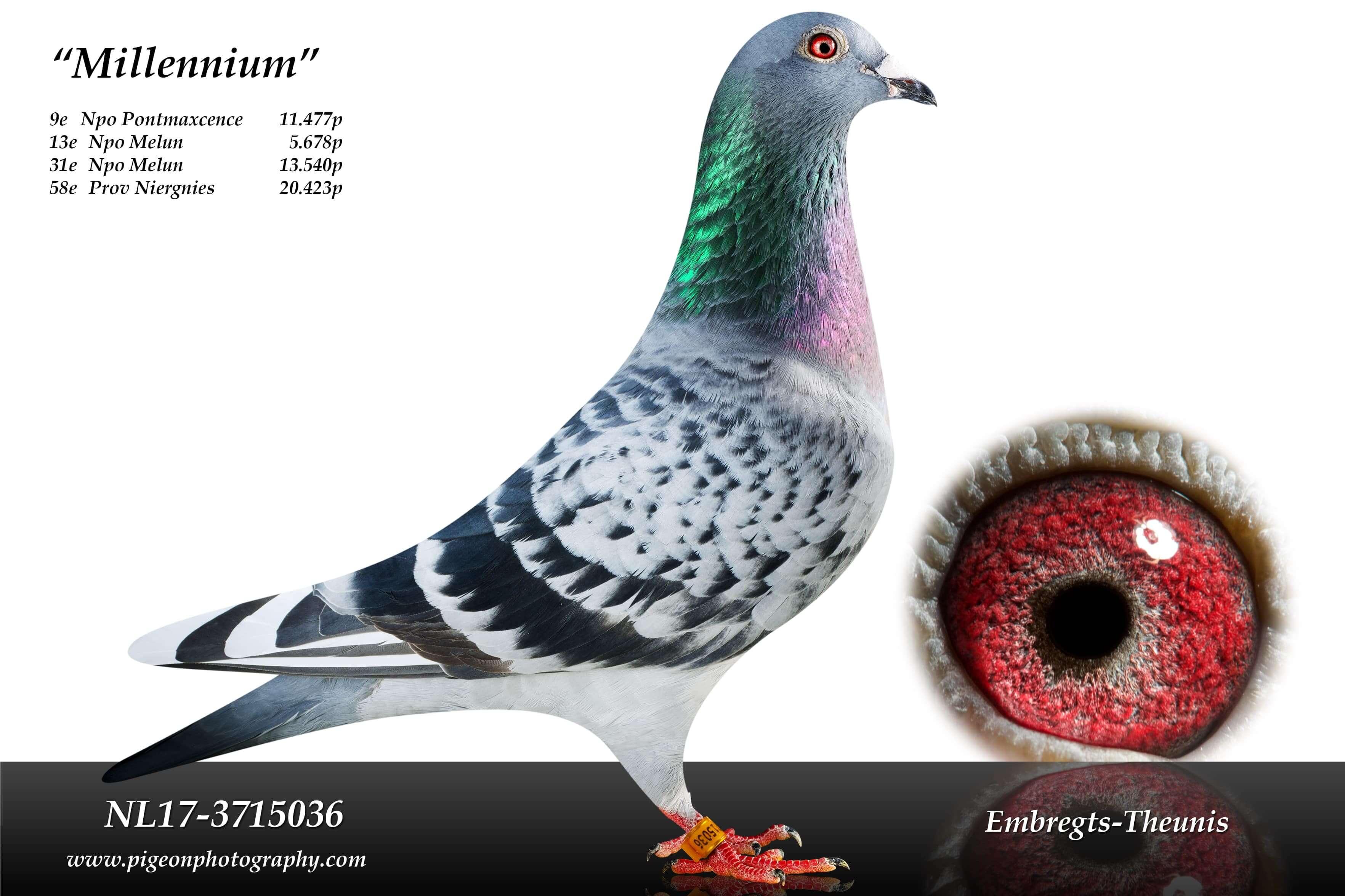 Millennium-NL17-3715036