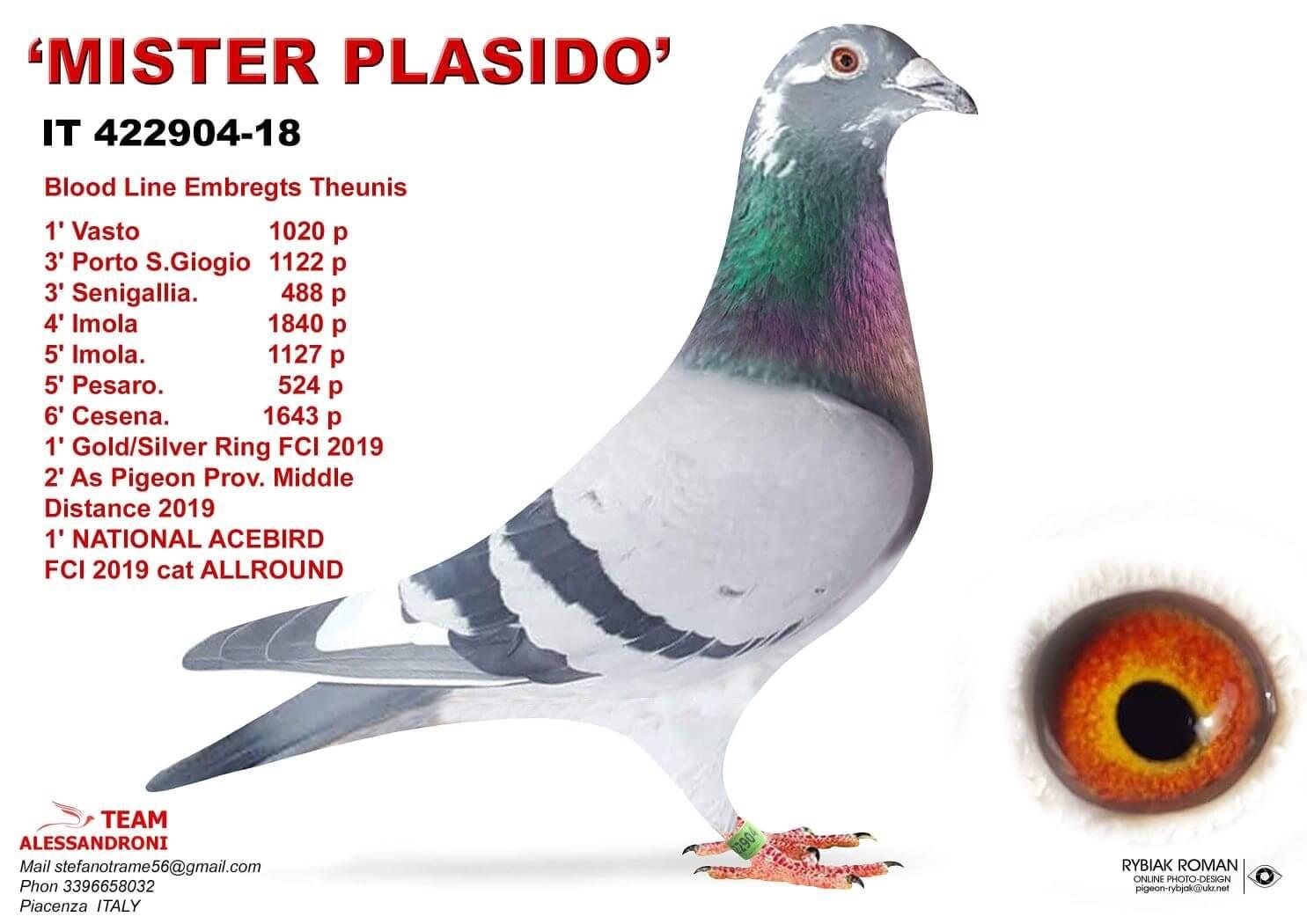 mister-plasido-it-422904-18